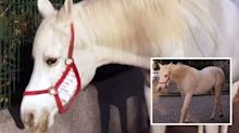 The story behind the horse that roams around town by itself