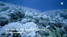 C'è ancora speranza per la barriera corallina in Florida