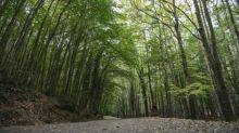 Khashoggi: la Turquie commence des recherches dans une forêt