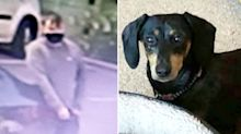 Woman has sausage dog stolen by gang of thieves outside petrol station