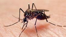 """""""Punto da zanzara tigre"""": focolaio di febbre Dengue in famiglia vicentina"""