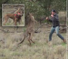 Let's Get Ready to Roo-ble! Kangaroo Gripping Dog in Chokehold Is Punched in the Face by Hunter