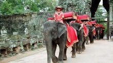 吳哥窟禁騎大象 旅行莫忘保護動物