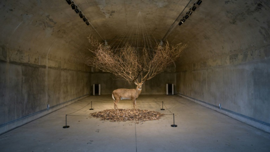 Dead stag installed at former US base in South Korea