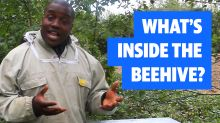 Bee Happy: What's Inside The Beehive?