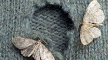 How to get rid of, and prevent, moths in the home