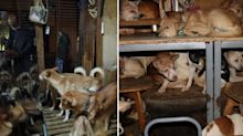 More than 150 dogs rescued in horrific case of animal hoarding