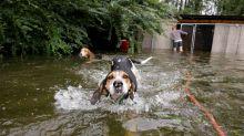 Hurrikan-Helfer findet eingeschlossene Hunde - gerade noch rechtzeitig