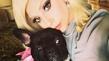 Lady Gaga's dogs found safe after gunpoint robbery