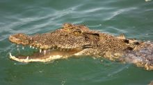 Australie : attaqué par un crocodile, il survit en lui mettant le doigt dans l'œil