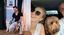 Pais de pets: conheça os famosos que são apaixonados pelos seus cães