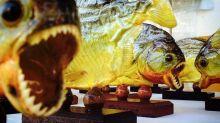 Retienen a chef peruano en aeropuerto de EEUU con 40 pirañas