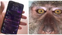 Malaysian man 'loses' phone, finds in nearby jungle nearby, with selfies of unlikely perpetrator (VIDEO)