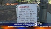 Santa Clarita Residents Warned After Coyote Attack