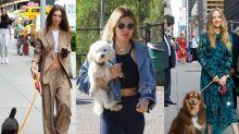 遛狗也要穿出品味,歐美名人與愛犬的零死角散步造型