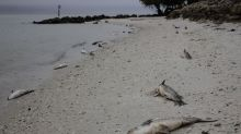 Red Tide discovered on Sarasota beaches