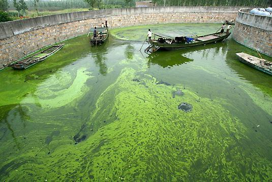 Stanford researchers harvest electricity from algae, unkempt pools become gold mines