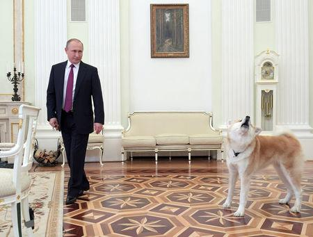 Putin S Barking Dog Take Center Stage At Media Interview
