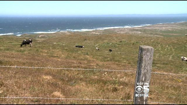 Long Range Plan For Point Reyes Has Local Ranchers Concerned