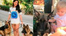 Día mundial de los animales: así presumen las celebrities de sus amigos peludos