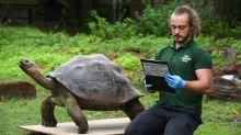 Animals at London Zoo