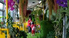 Taiwan's 'forest bus' charms passengers