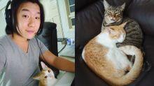 Pyong Lee é criticado por doar gatos antes de entrar no 'BBB 20'
