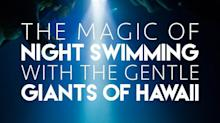 WATCH: The Magic of Night Swimming With the Gentle Giants of Hawaii