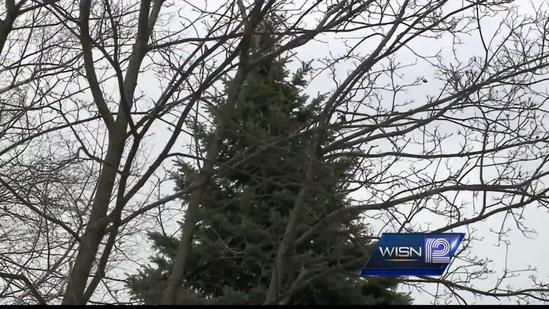 Christmas tree selected for Milwaukee County Courthouse rotunda