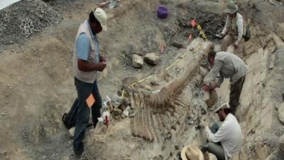 Dinosaur Tail Excavated in Northern Mexico
