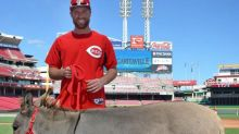 Reds enter scary territory by asking fans to help name Zack Cozart's donkey