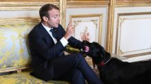 Oui oui: France's presidential pooch leaves palace puddle