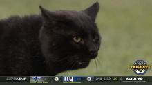 Unlucky for Giants? Black cat halts NFL defeat to Dallas Cowboys