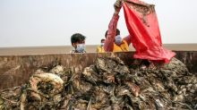 Botulism feared responsible for India migratory bird deaths