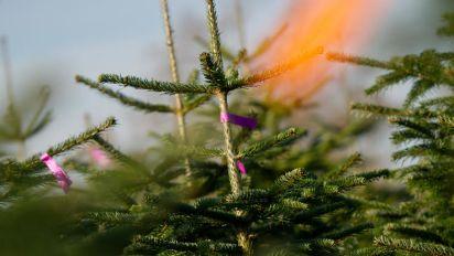 Der Weihnachtsbaum aus dem Netz