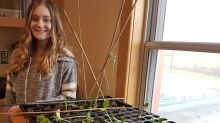 Students partner with Glace Bay Food Bank to grow food for clients