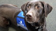 Airlines applaud government for animal guidance