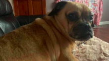 Dog owners hit out at dog sitter's 'lies' after six missing pets are confirmed dead