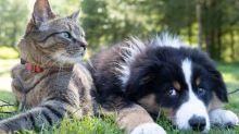 Combien coûte une assurance pour animaux de compagnie?
