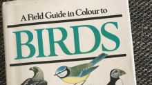 Hungry birds and marauding moles create a sense of wonder