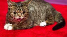 Berühmte Katze soll posthum ins Weltall geschossen werden