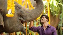 《魔蠍大帝》票房強導改拍寶萊塢片 與野生大象合作