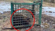 Tragic reason tortured bear kept in tiny cage