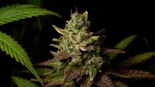 1 Incredibly Cheap Pot Stock Worth Buying Now
