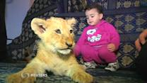 Lion cubs, baby hippo make splash in animal news