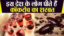 China People Drink Cockroach Potion Reason is Intresting Behind This