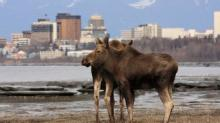Reindeer Tacos and Native Brews: a Great Night Out in Anchorage