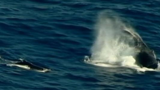 Surfer Knocked Unconscious by Whale