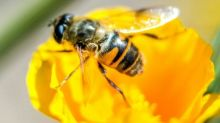 France halts sales of two Dow pesticides over bee fears