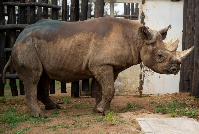 Nine black rhinos from S Africa relocated to Tanzania